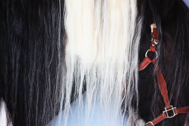 Schöne Pferdemähne stockbilder