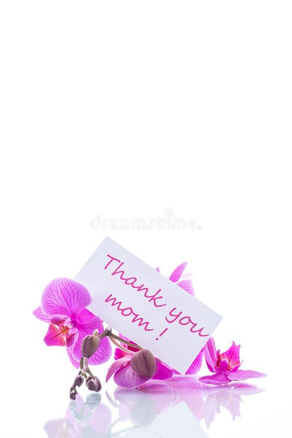 Schöne Phalaenopsisorchideenblumen stockfotografie