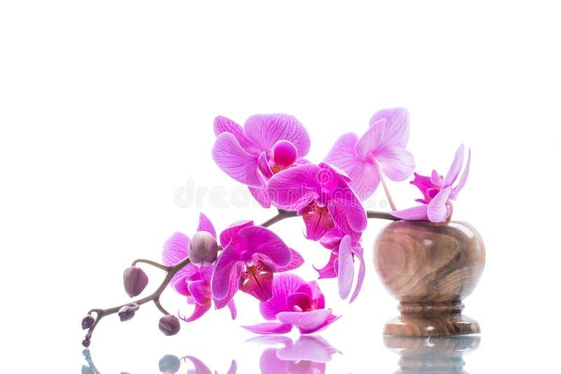 Schöne Phalaenopsisorchideenblumen stockbild