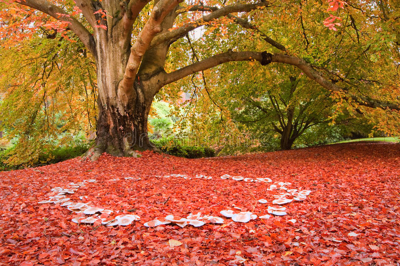 Schöne Pilze des feenhaften Ringes der Herbst-Fallnatur lizenzfreies stockbild