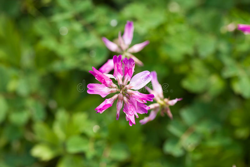 Schöne purpurrote Blumen unter der Sonne stockfotos