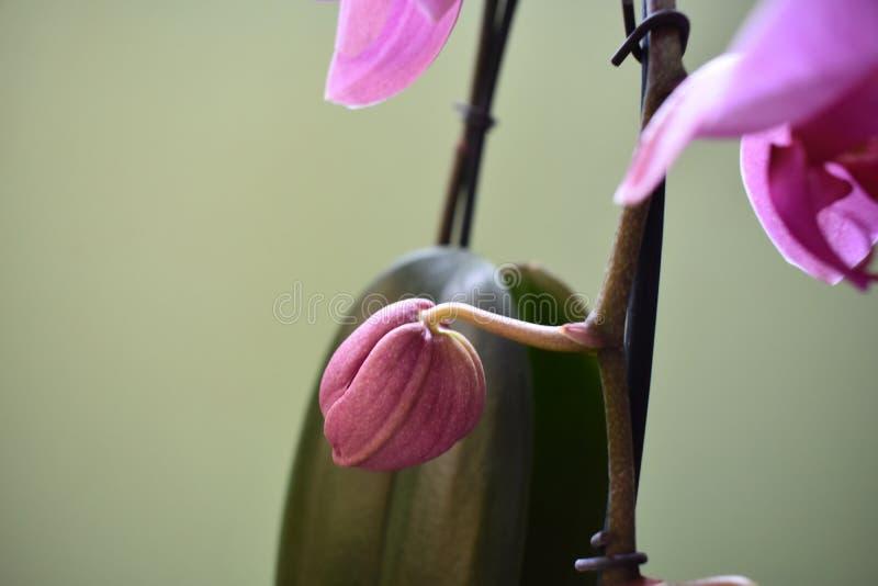 Schöne purpurrote Orchidee stockfoto