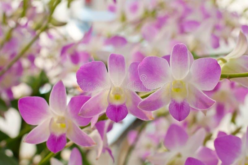 Schöne purpurrote Orchidee lizenzfreie stockfotografie