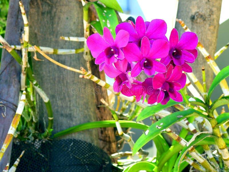 Schöne purpurrote Orchidee lizenzfreies stockfoto