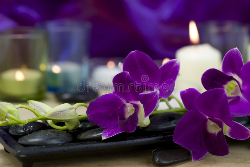 Schöne purpurrote Orchideen stockfotografie