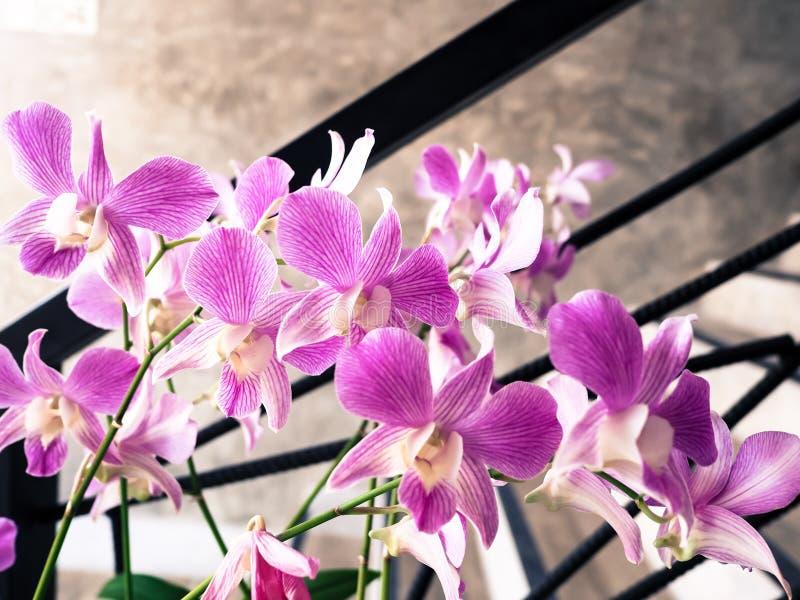 Schöne purpurrote Orchideenblume stockfotos