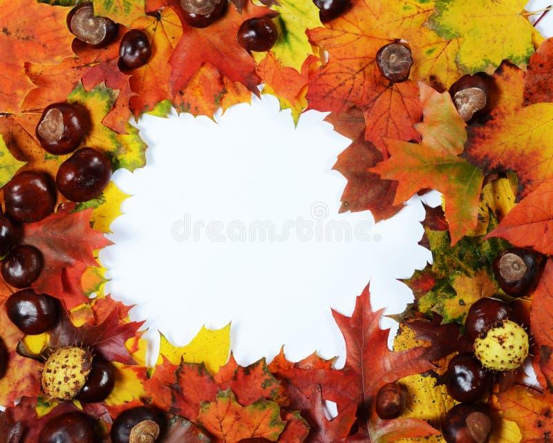 Schöne reale Blätter getrennt auf Weiß stockfoto