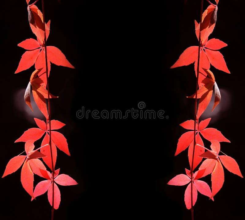 Schöne reale Blätter getrennt auf Weiß stockbild