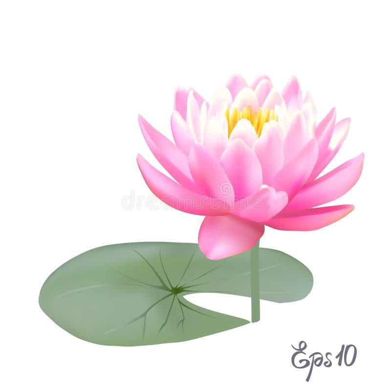 Schöne realistische Illustration einer Lilie oder des Lotos lizenzfreie abbildung