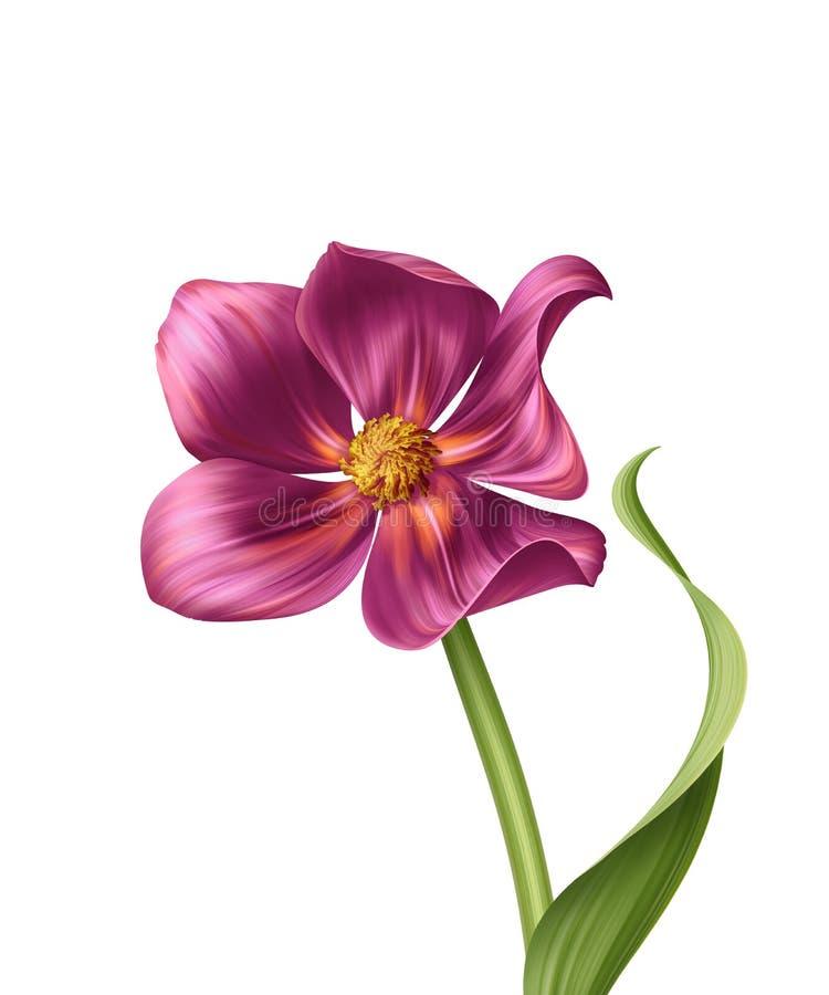 Schöne realistische rosa Blumenillustration stock abbildung
