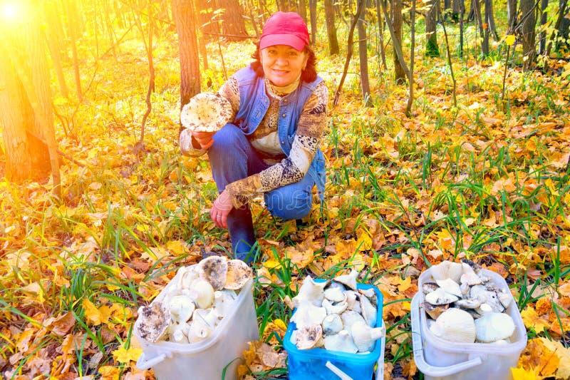 Schöne reife Frau im Herbstwald in der reichen Ernte von Pilzen sich freuen lizenzfreies stockfoto