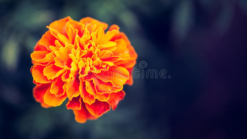 Schöne Retro- farbige Blume stockfotografie