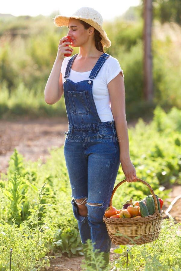 Schöne riechende Tomaten der jungen Frau beim Halten des Korbes mit Frischgemüse im Garten stockbild