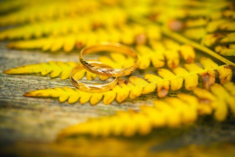 Schöne Ringe auf Herbstlaub stockbilder