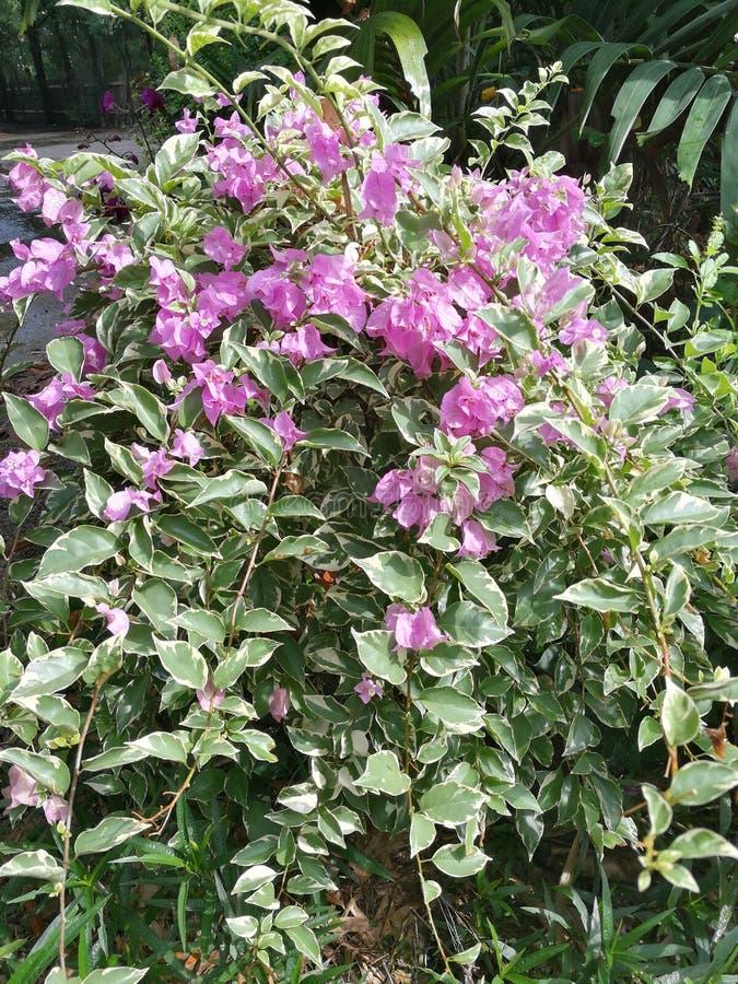 Schöne rosa Blumen lizenzfreie stockfotos