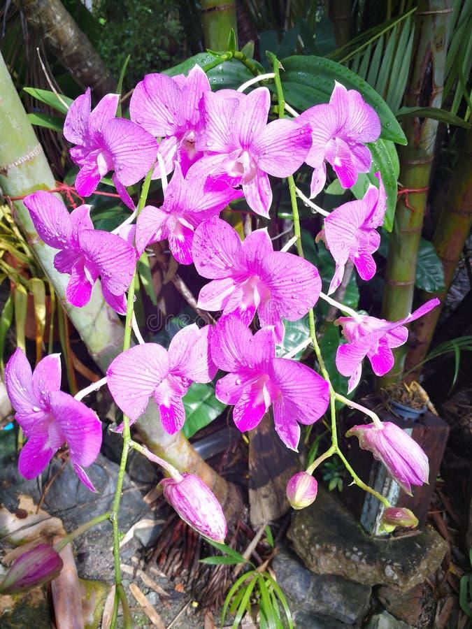 Schöne rosa Blumen lizenzfreie stockfotografie