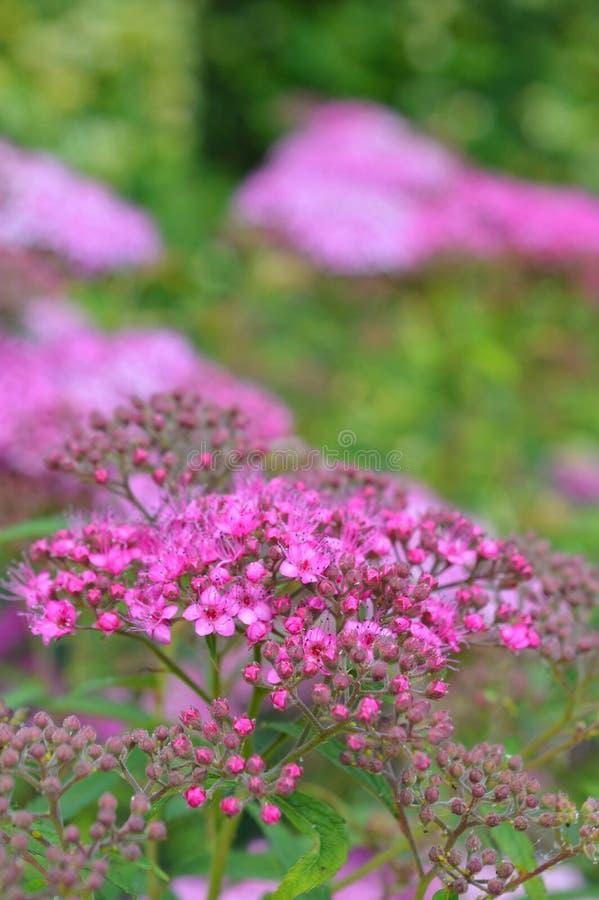 Schöne rosa Blumen gestalten landschaftlich lizenzfreies stockbild