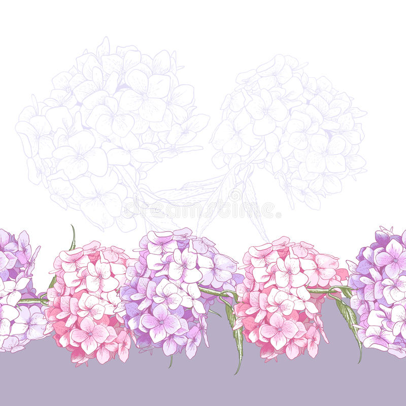 Schöne rosa Hortensie-nahtlose Blumengrenze vektor abbildung