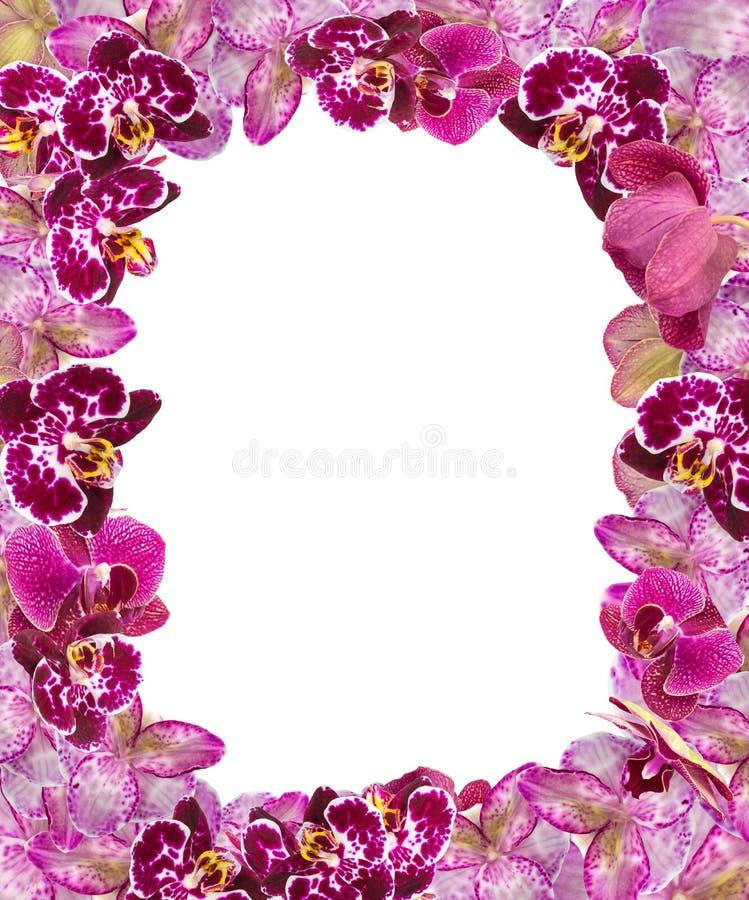 sch ne rosa orchideen grenze f r gru karte oder reizenden blumen rahmen stockfoto bild von. Black Bedroom Furniture Sets. Home Design Ideas