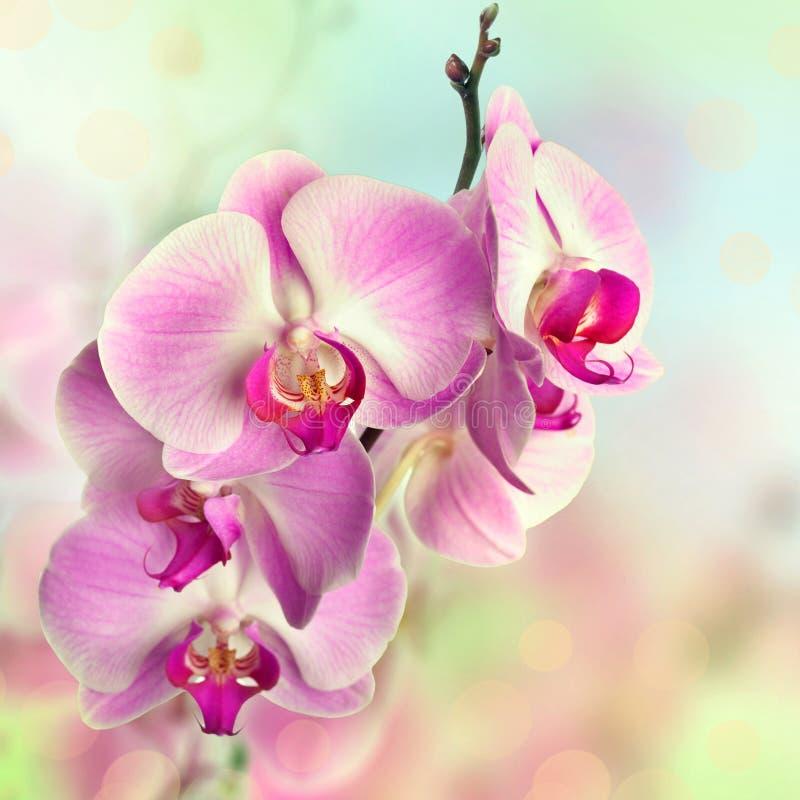 Schöne rosa Orchideenblumen auf unscharfem Hintergrund stockfoto