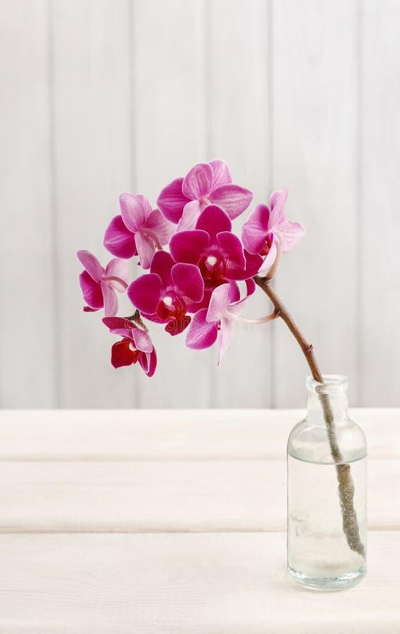 Schöne rosa Orchideenblumen in der Glasflasche stockfoto
