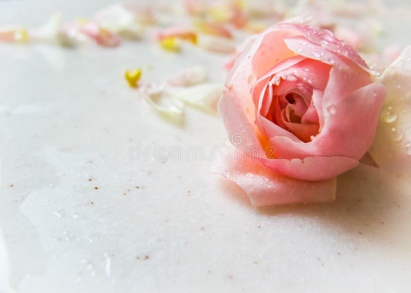 Schöne rosa rosafarbene Knospe und Blumenblätter mit Tautropfen auf Marmor Perfekte Hintergrundgrußkarte für Geburtstag, Valentin lizenzfreie stockfotos