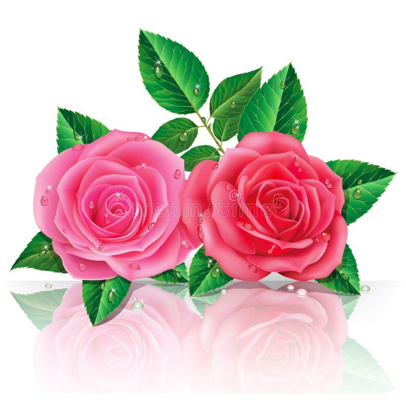 Schöne rosa Rosen. lizenzfreie abbildung