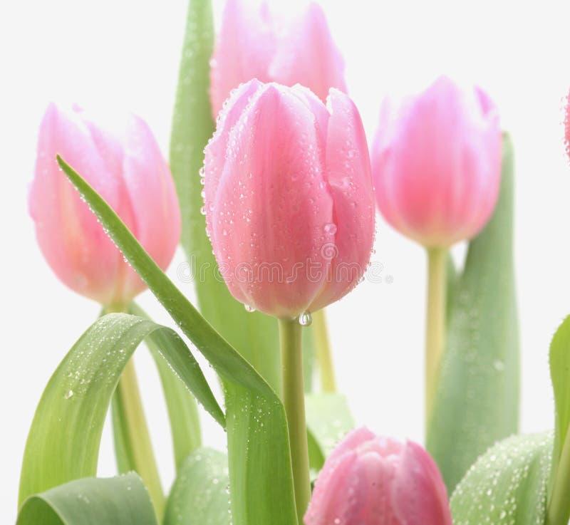 Schöne rosafarbene Blumen lizenzfreies stockbild