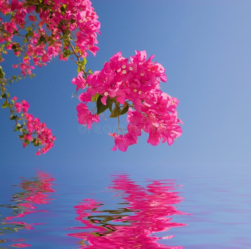 Schöne rosafarbene Blumen lizenzfreie stockfotografie