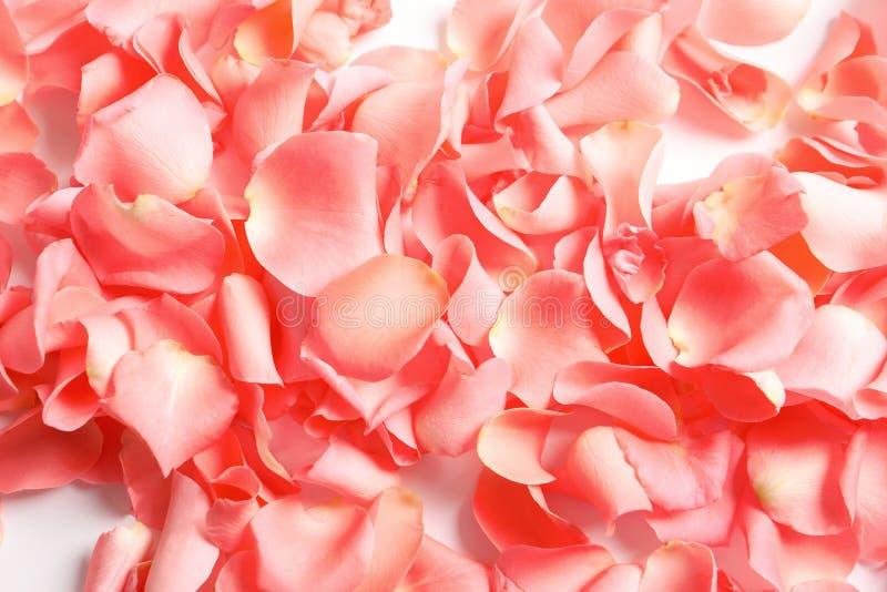Schöne rosafarbene Blumenblätter stockfotos