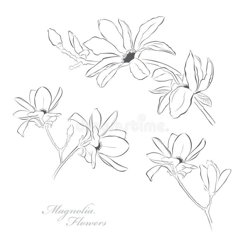 Schöne rosafarbene Magnolie-Blumen lizenzfreie abbildung