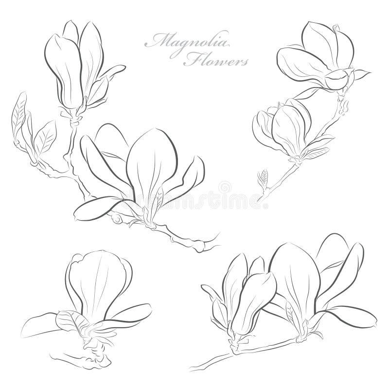 Schöne rosafarbene Magnolie-Blumen stock abbildung