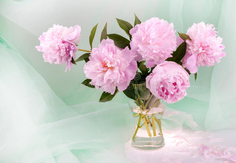 Schöne rosafarbene Pfingstrosen lizenzfreies stockfoto