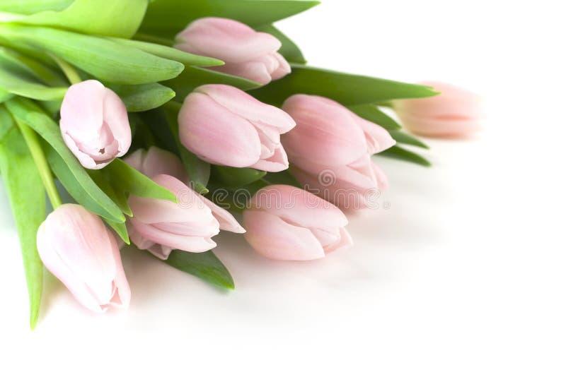 Schöne rosafarbene Tulpen lizenzfreie stockbilder