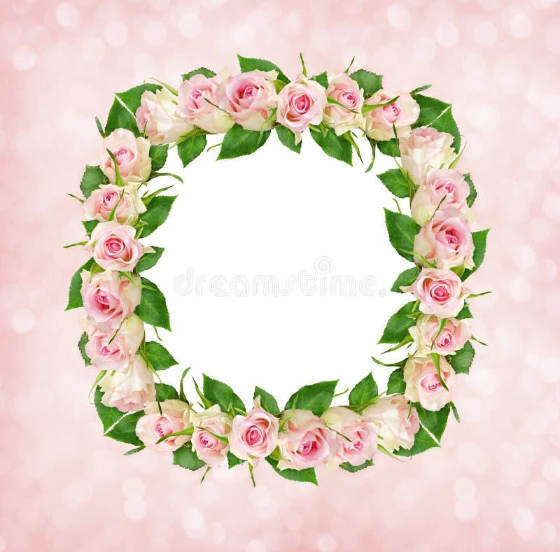 Schöne Rosarose Blüht Im Quadratischen Rahmen Mit Weißer Karte Für ...