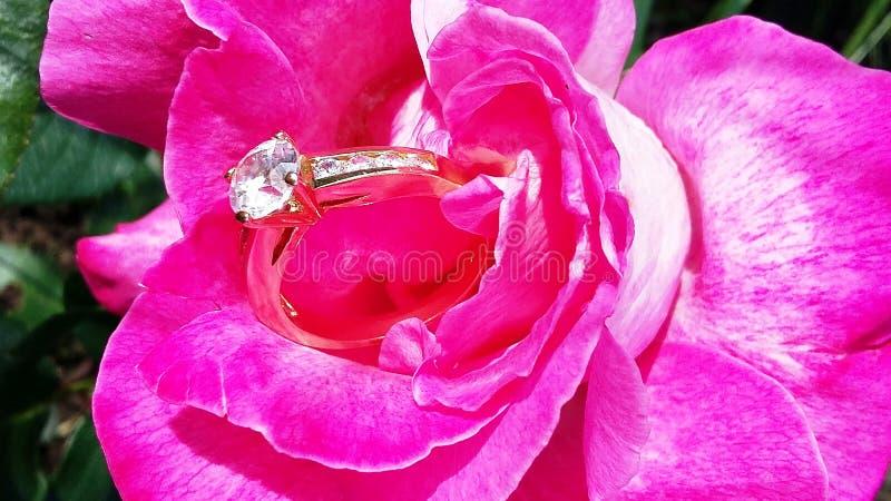 Schöne Rosarose mit einem Ring lizenzfreies stockbild