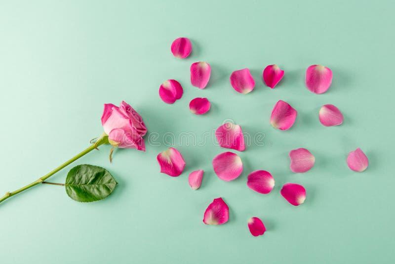 Schöne Rosarosenblume mit grünen Blatt und den Blumenblättern auf Blau stockfotos