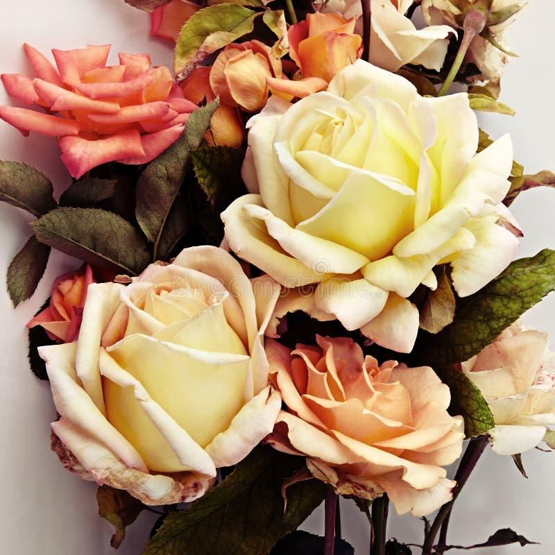 Schöne Rosen Vintage redete an stockbild