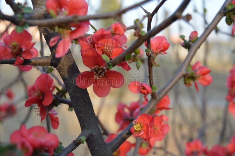 Schöne rote Blumenblätter lizenzfreie stockfotos