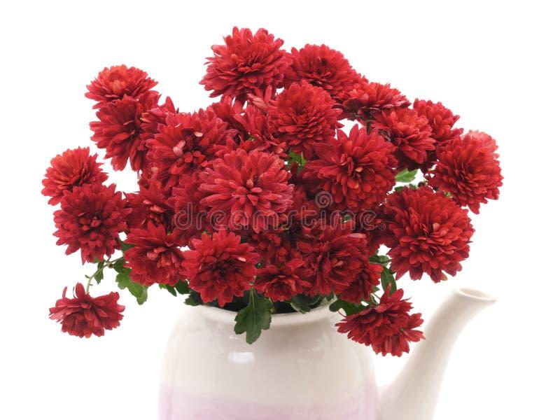 Schöne rote Chrysanthemen im Kessel lizenzfreies stockbild