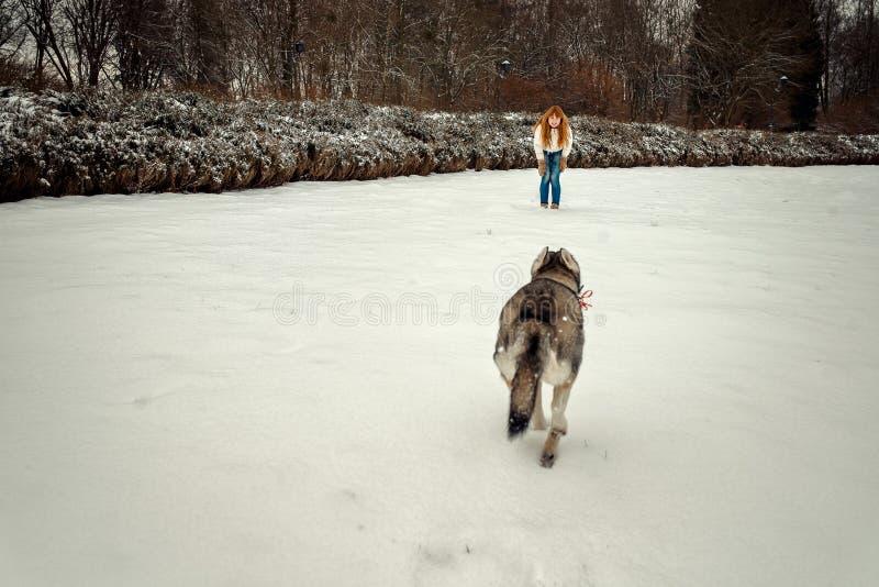 Schöne rote Hauptfrau nennt ihren reizenden sibirischen Husky Schlittenhund geht zu ihr entlang der schneebedeckten Wiese in stockfotografie