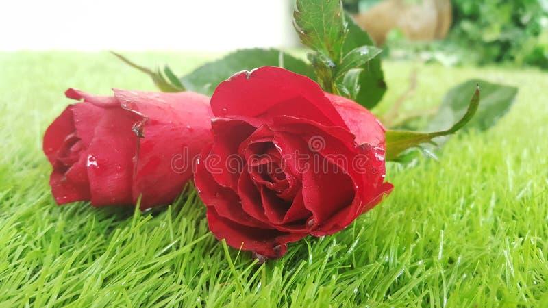 Schöne rote rosafarbene Blume auf grünem Gras für Valentinsgrußtag oder -Hochzeit stockfotografie