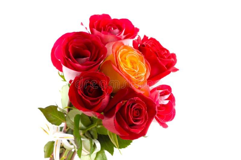 Schöne rote Rosen stockbild