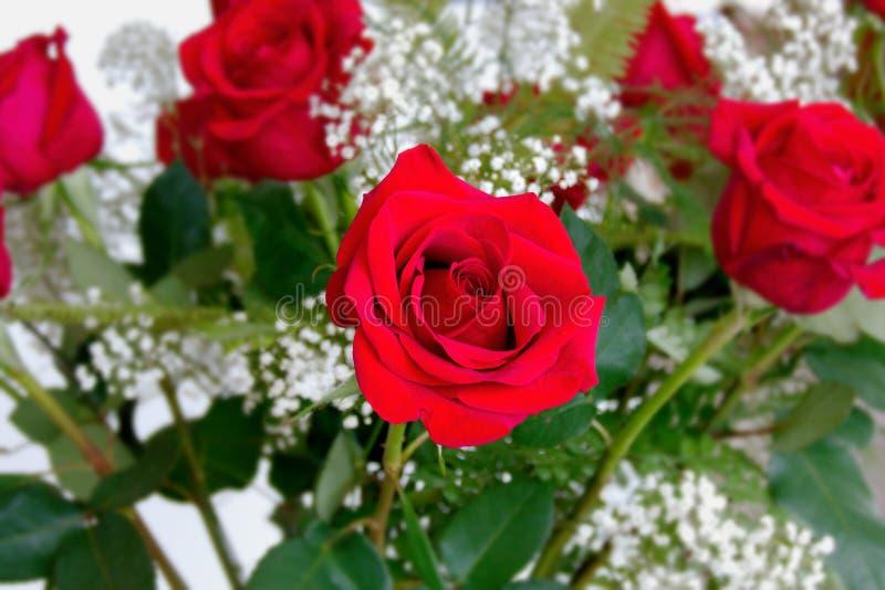 Schöne rote Rosen vereinbarten mit weißem Baby ` s Atem für Valent stockfotos