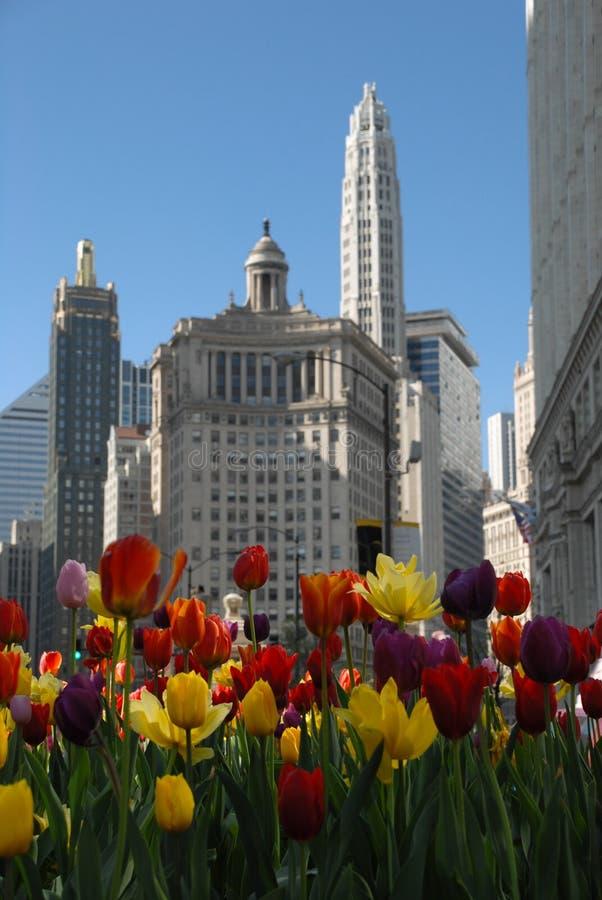 Beautiuful Chicago mit Tulpen im Frühjahr lizenzfreie stockfotos