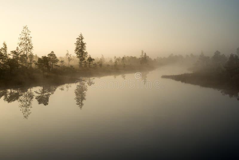 Schöne ruhige Landschaft von nebelhaftem Sumpfsee lizenzfreie stockfotografie