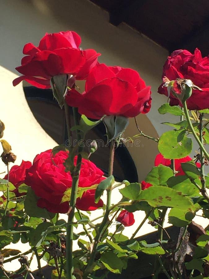 Schöne südliche Blütenpflanzen lizenzfreie stockbilder