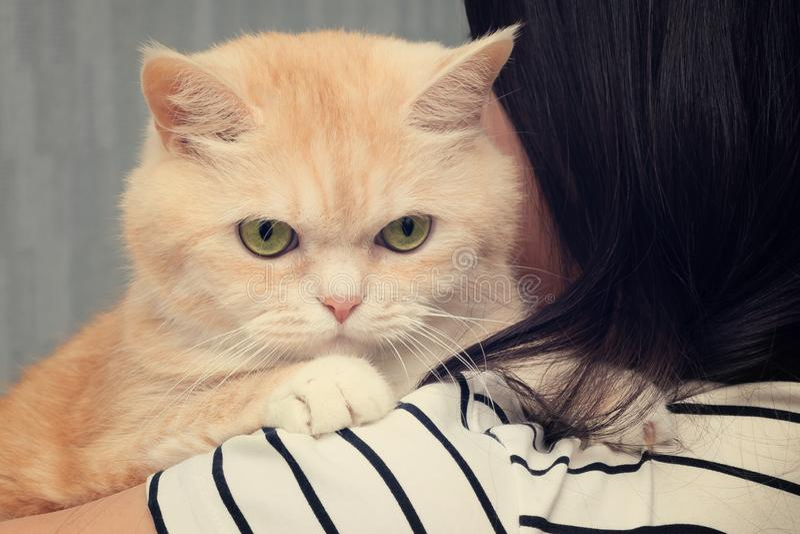 Schöne Sahnekatze sitzt auf der Schulter eines dunkelhaarigen Mädchens stockfotografie