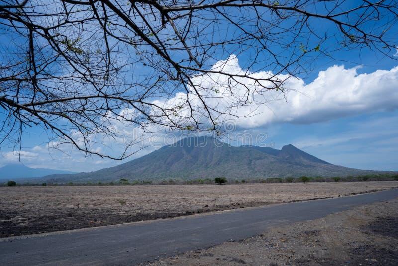 Schöne Savannenlandschaft in Baluran Banyuwangi Indonesien lizenzfreie stockfotos