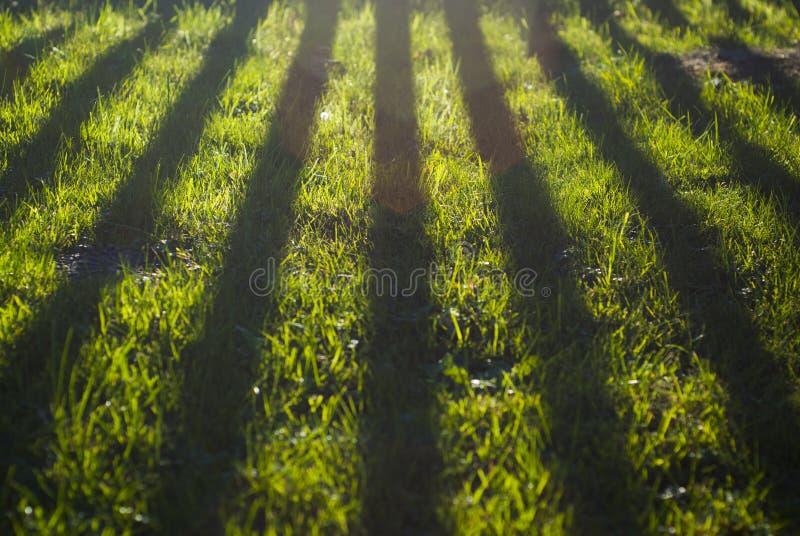 Schöne Schatten auf Hausgartengras Klare Farben stockfotografie